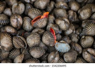 Fresh blood cockle or blood clam ,Tegillarca granosa close up.