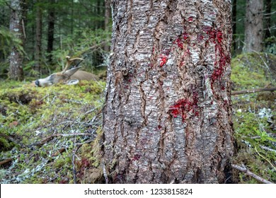 Fresh Blood Trail on a Tree with a Dead Deer in the Background