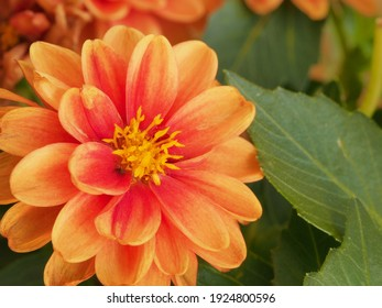 Fresh and blooming colorful flower scenes