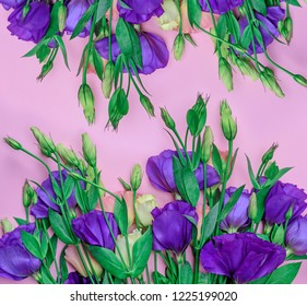 fresh blooming flowers Eustoma Lisianthus on pink paper background, top view