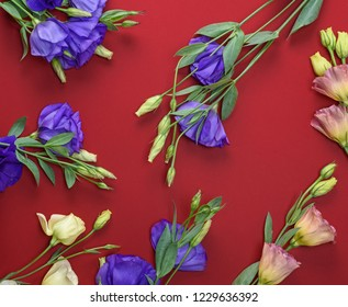 fresh blooming flowers Eustoma Lisianthus on red paper background, top view