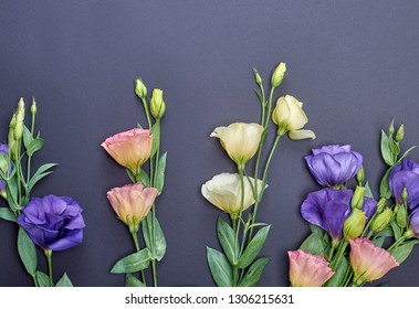 fresh blooming flowers Eustoma Lisianthus on black paper background, top view, copy space