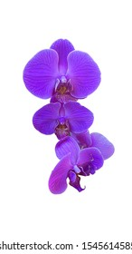 fresh blooming purple flower orchid