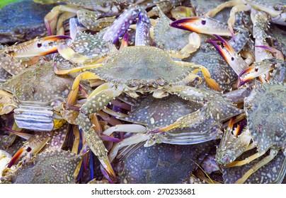 Fresh  blue crab at a seafood market.