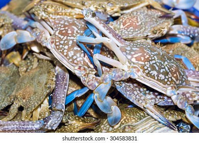 Fresh blue crabs on ice exposition at the seafood market In Thailand. Display of raw crab catch of the day