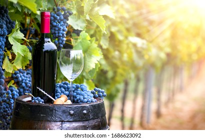 Fresh blue grapes and red wine bottle on wooden barrel. Grape background and sunlight.