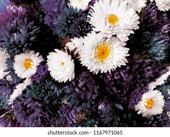 Aster images stock photos vectors shutterstock fresh blue lilac and white aster flowers background blooming floral bouquet mightylinksfo