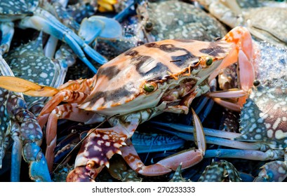 Fresh blue and red crab is difference  at a seafood market.