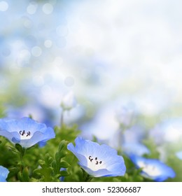 Fresh, blue, soft summer blossoms on bokeh background. Shallow DOF.