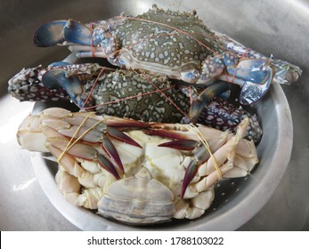 Fresh Blue swimming crabs are arguably Australia's favorite eating crab and are highly sought by commercial and recreational fishers for their tasty white meat
