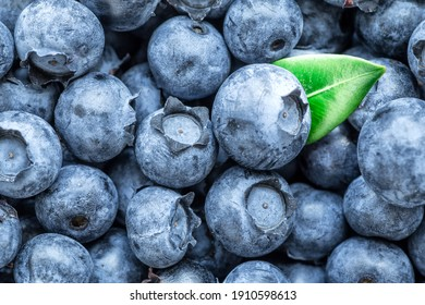 Fresh blueberries background with copy space for your text. Vegan and vegetarian concept. Macro texture of blueberry berries. Summer healthy food.