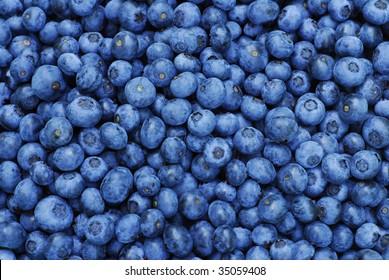 Fresh Blueberry Background