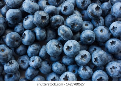 Fresh Blueberry Background. Texture blueberry berries close up. Various fresh summer berries. Blue food.