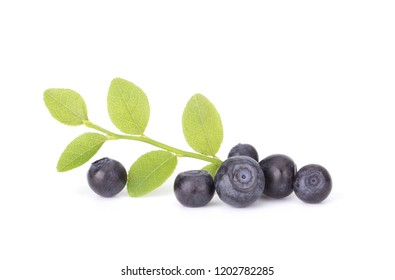 Fresh blueberry from forest isolated on white background with green leaves
