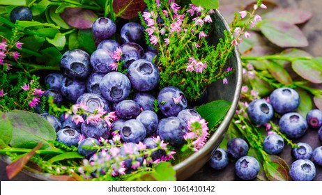 Fresh blueberry full of a antioxidant and  an anthocyan flavonoid