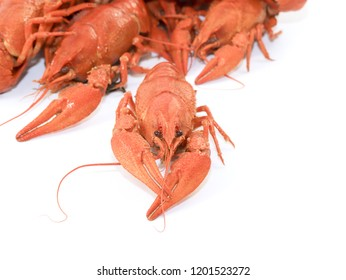 fresh boiled crayfish as an element food and snack to alcoholic drinks and beer