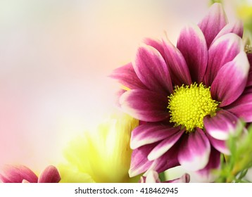 A fresh bouquet of purple, yellow and pink flowers in a horizontal presentation with an area for text.