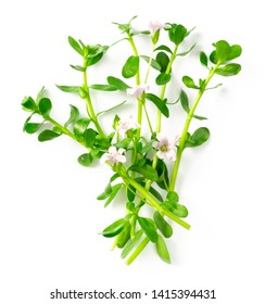 fresh brahmi twigs with flowers isolated on white background, top view
