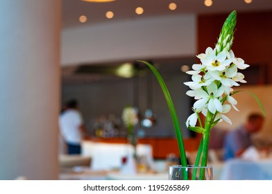 Fresh branch with beautiful white flowers and green leaf in glass vase with blurred background. Modern minimal flower arrangement with soft backlight.