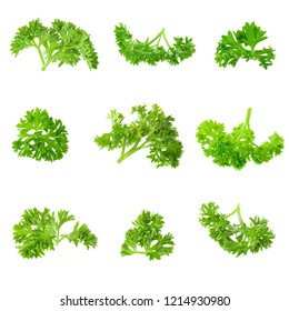Fresh branch of green parsley natural food isolated on white background.
