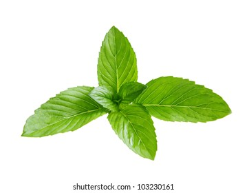 Fresh branch of spearmint mint leaves isolated on white background