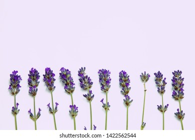 Fresh branches of lavander, background with flowers
