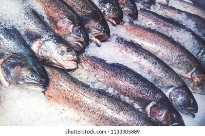 fresh brook (speckled) trout