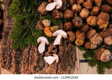 Fresh brown mushrooms. Close up image of mushrooms on the wood.