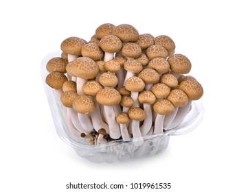 fresh brown shimeji mushroom, beech mushroom or edible mushroom in plastic case isolated on white background
