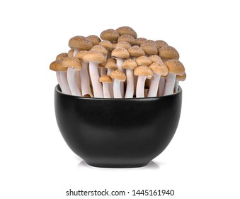 fresh brown shimeji mushroom, beech mushrooms or edible mushroom in the black bowl isolated on white background