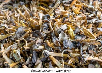 fresh, brown wild mushrooms