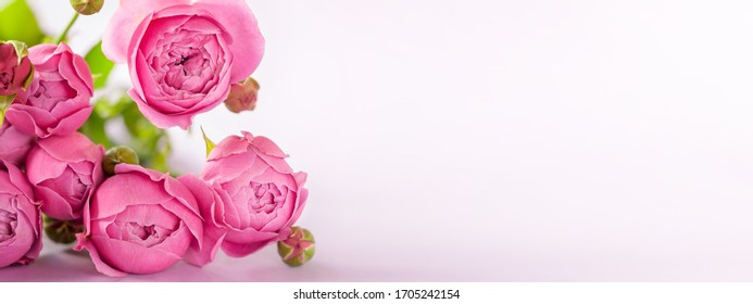 Fresh bunch of Beautiful pink flowers roses bouquet on background, copy space for text. Banner for Mother's Day