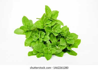 Fresh  bunch green minth herb or mentha plant ,vegetable aroma and tasty fresh, good for health ,ingerdiant in food and can use for make tea ,isolated white background