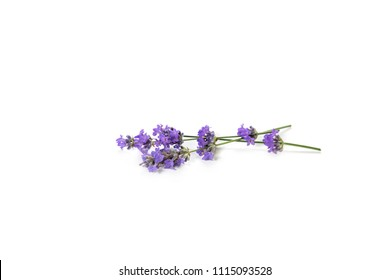 Fresh bunch of lavender flowers on a white background. Selective focus.