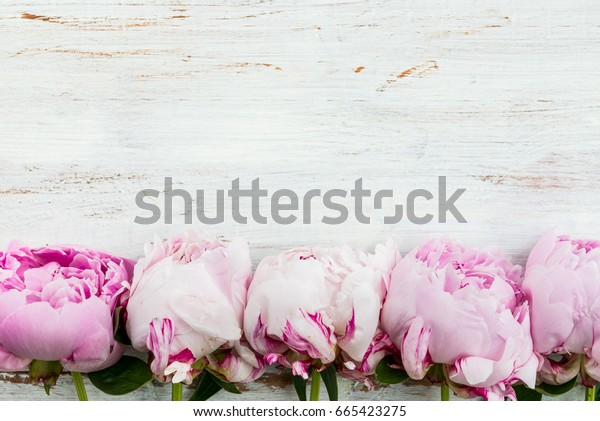 Fresh bunch of pink peonies on white wooden background. Card Concept, top view, copy space for text