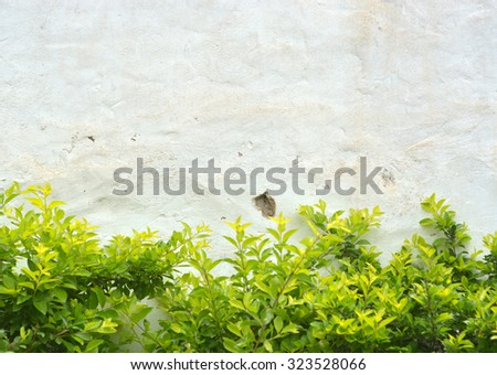 Fresh Bush Plant Against White Stucco Stock Photo (Edit Now