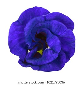 Fresh Butterfly pea, Pea flowers isolated on white background