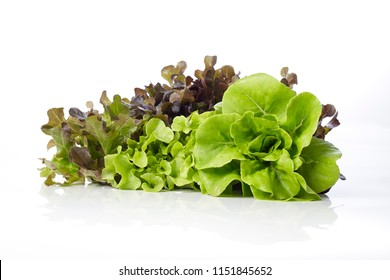 Fresh Butterhead with Red and green oak lettuce on a white background, Hydroponic salad