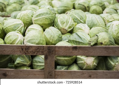 Fresh cabbage from field. Cabbage harvest, cabbage background. Cabbage in a wooden crate.