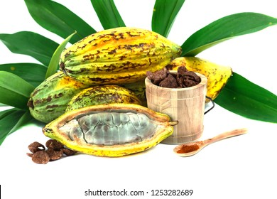 Fresh cacao fruit with cocoa crunch (Products Production from cacao) on white