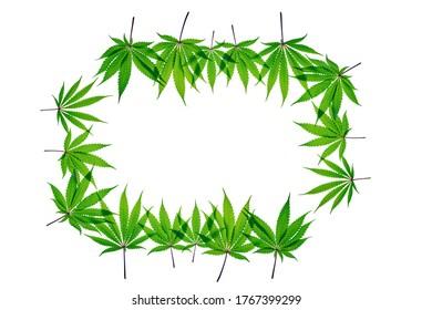 Fresh Cannabis frame leaf on plain background, isolated