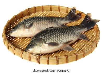 fresh carp fish closeup