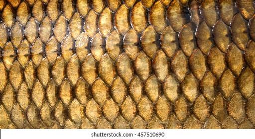 Fresh carp fish scales texture