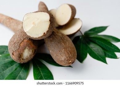 Fresh cassava (Manihot esculta Crantz) and green leaf on white backgeound. Concenpt of starch and flour raw material.