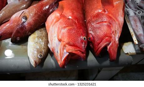 Fresh Caught Fish, Red Snapper in Filipino Market - Siargao, Philippines