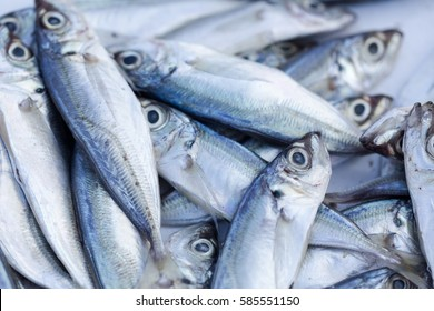 Fresh caught fishes and other seafood on market in Morocco ready for sell