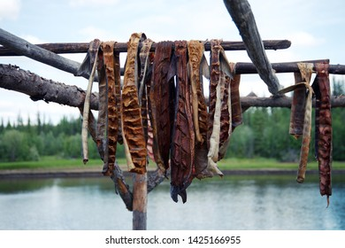 Fresh caught Salmon hanging to dry in by River in Fairbanks Alaska