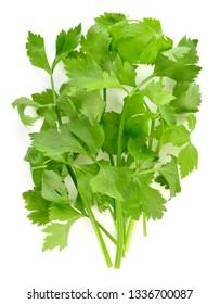 fresh celery isolated on a white background