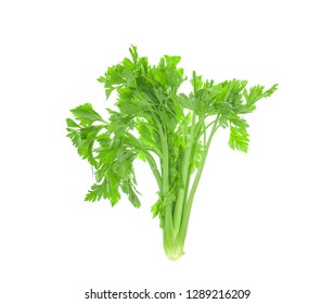 Fresh celery stalks on a white background