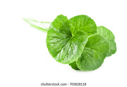 Fresh Centella asiatica, Asiatic Pennywort leaf on white background